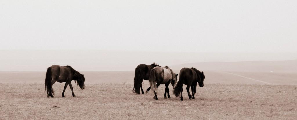 Grasslands dans Chine img_1034